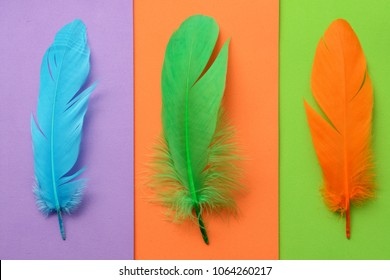 Bright colorful feather abstraction useful as background or wallpaper