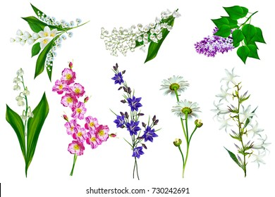 Bright colorful field and garden flowers isolated on white background.