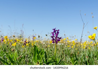 Bright and colorful flowery field in a low perspective image in spring season at the swedish island Oland