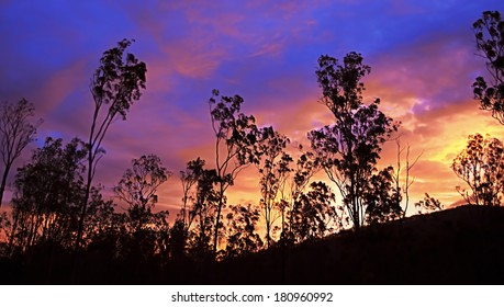 Bright colorful glowing Australian sunset panorama with gum tree silhouette during early autumn evening