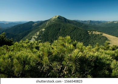 bright colorful green lonely mountain scenic top view from needle branches top trees in blue sky clear weather day time