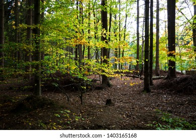 Bright colorful leaves in a Dark forest for the fall Season