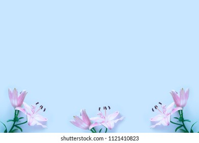 Bright colorful lily flowers. Floral background.