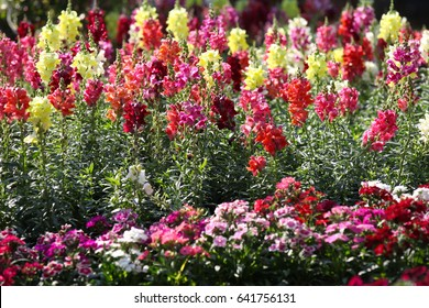 Bright colorful multicolored flowers, Thailand, Southeast Asia