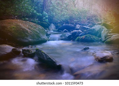 Bright Colorful Sunlight Rays over a Small River in the Empty Natural Forest.