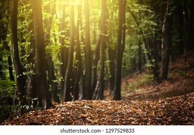 bright colorful sunset light in autumn landscape with fallen leaves on forest floor