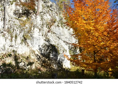 Bright and colorful tree in front of a rockface on an autumn afternoon