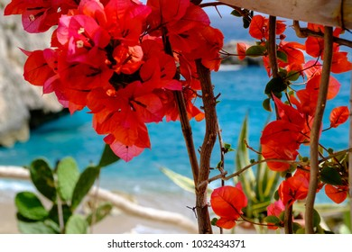 Bright colors of Capri flowers with blue sea at the background, Capri, Italy.