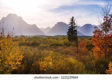 Bright colors of the Fall season in Grand Teton National Park, Wyoming, USA