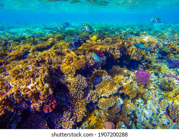 bright colors and natural forms of the coral reef and its inhabitants in the Red Sea