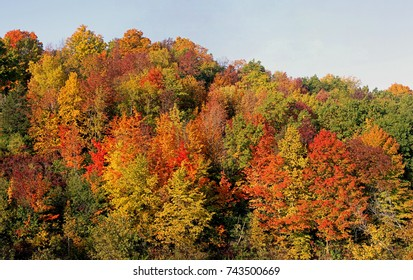 Bright colors of Wisconsin Fall scenery, climbing into the sky up hill side. Almost fills the screen
