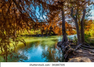 Bright Cypress Trees with Fall Foliage on the Guadalupe River at Guadalupe State Park, Texas