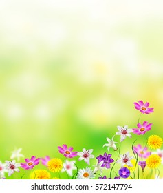 bright daisy flowers on a background of the summer landscape.