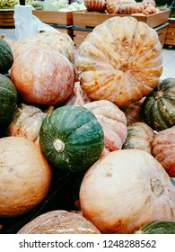 Bright decorative pumpkins. Natural background of pumpkin. Beautiful and healthy vegetarian product grown in the market.