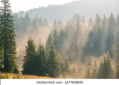 Bright early morning forest in the Piatra Craiului mountains, Romania