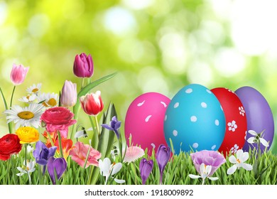 Bright Easter eggs and spring flowers on green grass outdoors