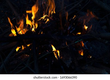 A bright fire in the forest is burning. You can see the flames on the branches and the coals.