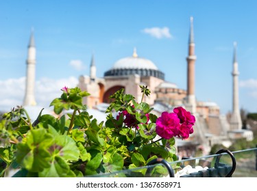 Bright flower and blurred view of Hagia Sophia in Istanbul