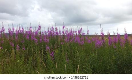 Bright flower in a field in Scotland.