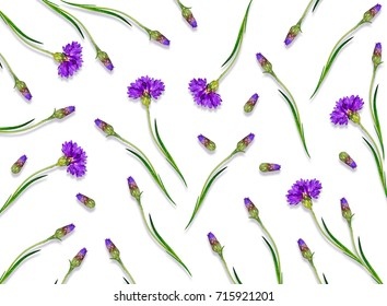 Bright flowers cornflowers isolated on white background.