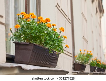 Bright flowers grow in a box on the windowsill