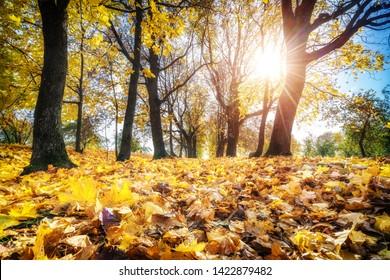 Bright foliage in sunny autumn park
