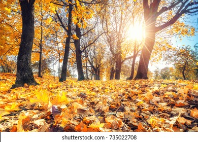 Bright foliage in sunny autumn park