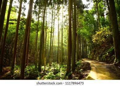 The Bright Forest