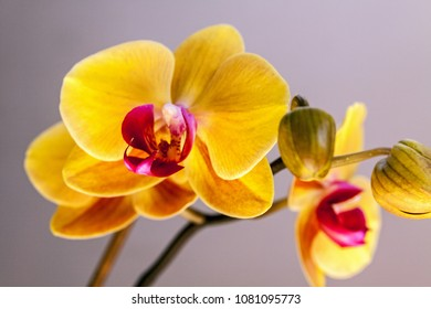 Bright fresh beautiful yellow orchid flower with branch
