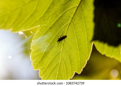 Bright fresh nature green leaf in park with insect worm ant