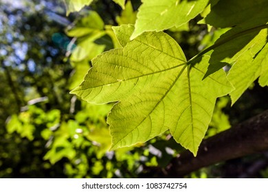 Bright fresh nature green leaf in park with sunlight