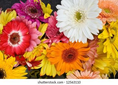 Bright Gerber Daisy Bouquet