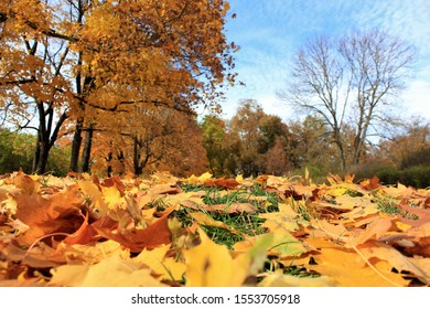 Bright golden autumn foliage in the estate of Leo Tolstoy