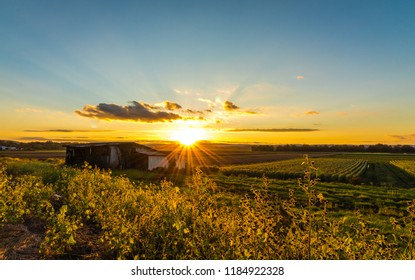 Bright golden sunset in late summer over farmlands in the black dirt region of Pine Island, New York