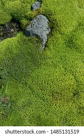 Bright green color Icelandic moss fluffy and soft with small water stream river and green grass near.  Beautiful background of Iceland nature