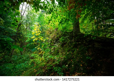 Bright green forest in the spring