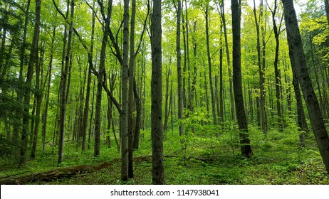 Bright green forest in the summer time