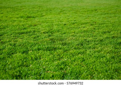 Bright and green grass field, natural summer background.