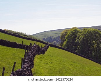 bright green grass meadows meadows surrounded by dry stone walls on the sides of a valley near crimsworth dean and above hardcastle crags in calderdale with forest trees and farmland in the distance