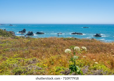 Bright green grass on the sea background. Sonoma Coast State Park, California, USA