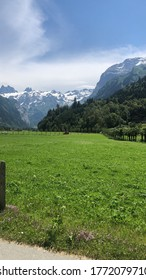 Bright Green Grass with the Switz Alps