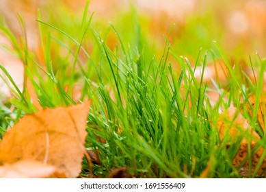 Bright green grass with yellow leaves close-up. Nature content.