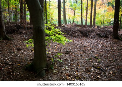 Bright green leaves in a Dark forest for the fall Season