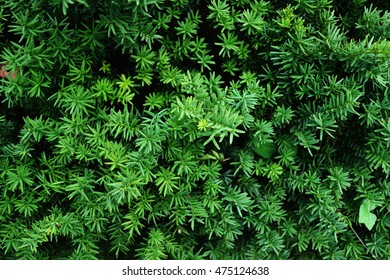 Bright green leaves on the branches in the forest
