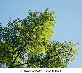Bright green leaves of a tree with sky background photo