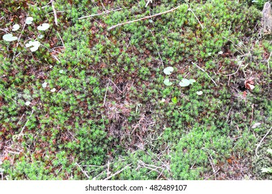 Bright green moss and forest ground macro shot