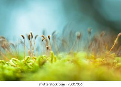 Bright green moss macro shot