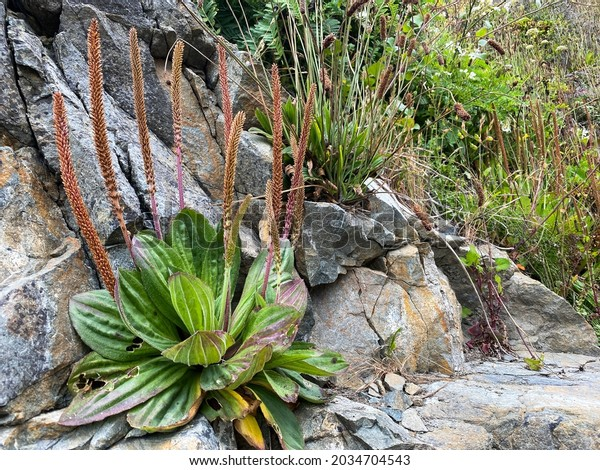 a bright green ocean sea plants foliage growing on seaside rock formation