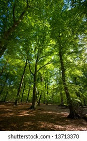 bright green spring forest with shade on the floor