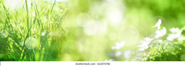 Bright green spring panorama background with bokeh effects grasss and flowers